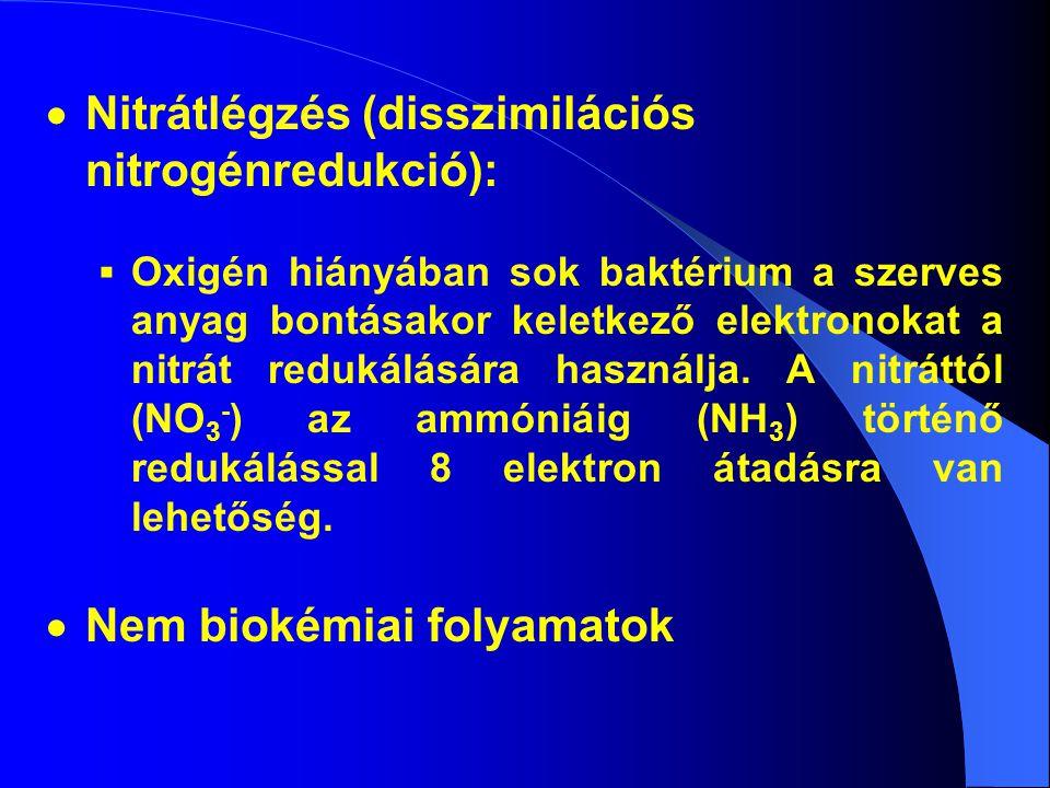 Nitrátlégzés (disszimilációs nitrogénredukció):