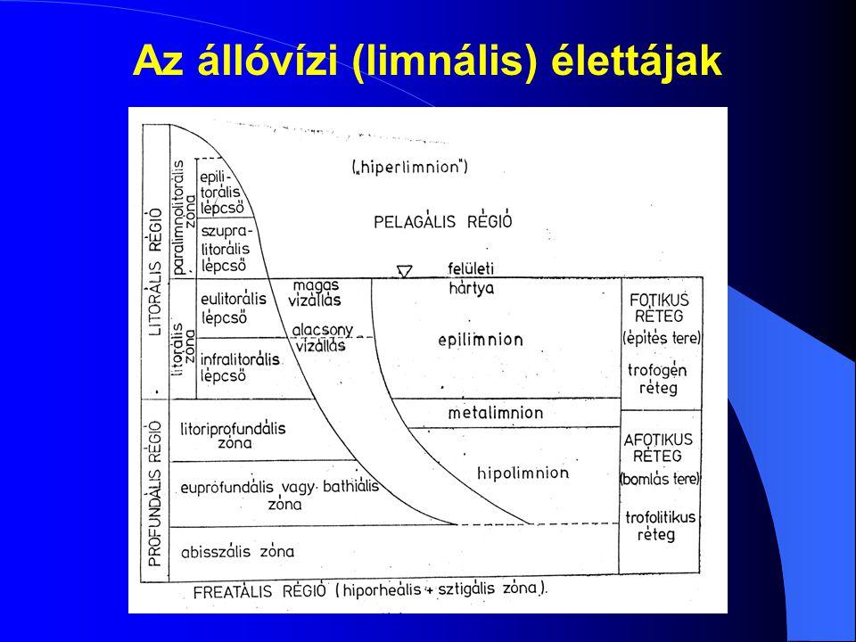 Az állóvízi (limnális) élettájak