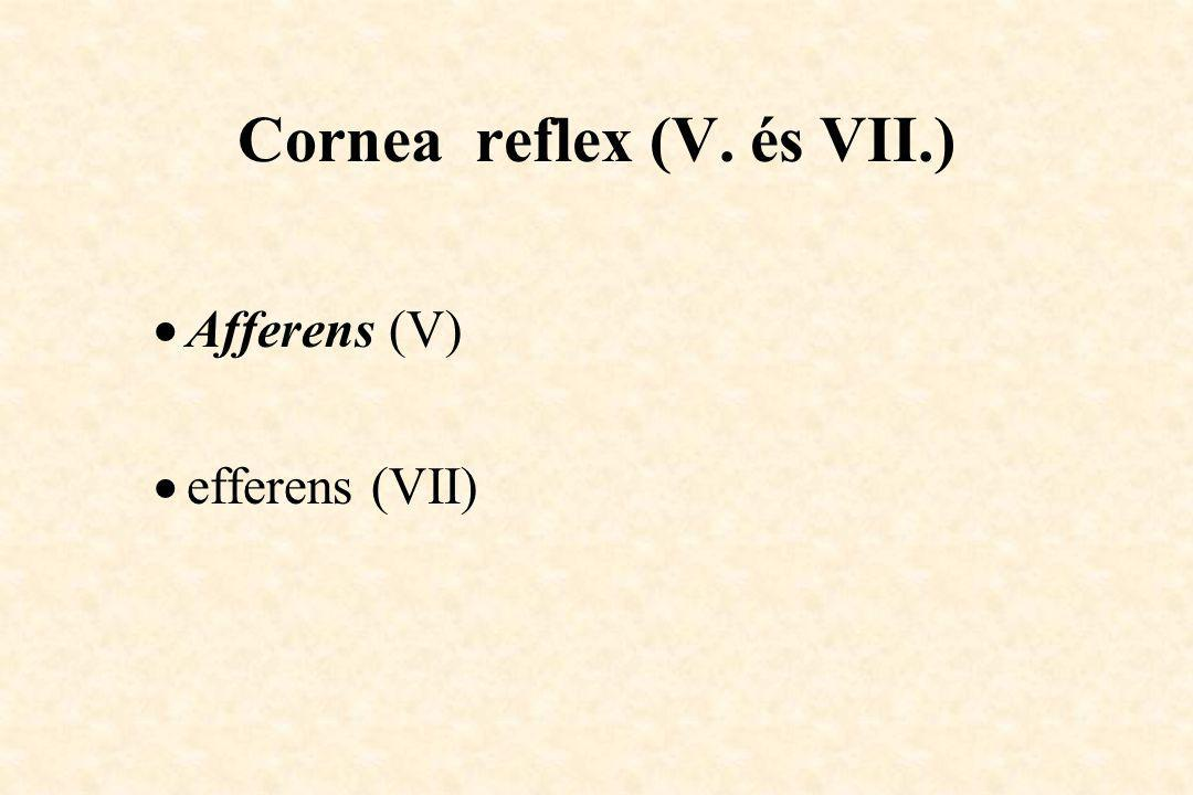 Cornea reflex (V. és VII.)