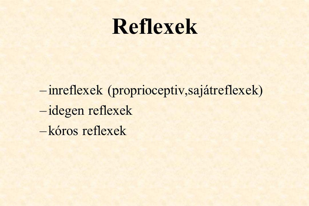 Reflexek inreflexek (proprioceptiv,sajátreflexek) idegen reflexek