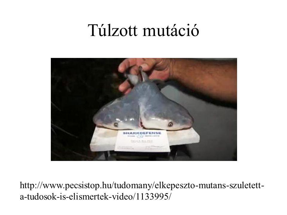 Túlzott mutáció http://www.pecsistop.hu/tudomany/elkepeszto-mutans-szuletett-a-tudosok-is-elismertek-video/1133995/