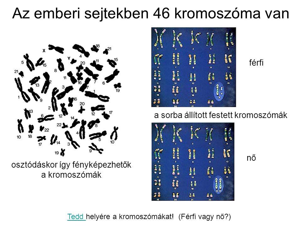 Az emberi sejtekben 46 kromoszóma van