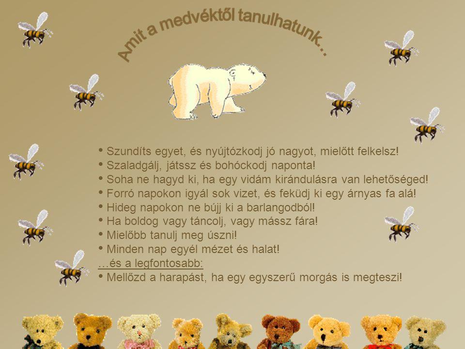 Amit a medvéktől tanulhatunk…