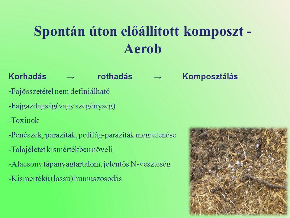 Spontán úton előállított komposzt - Aerob
