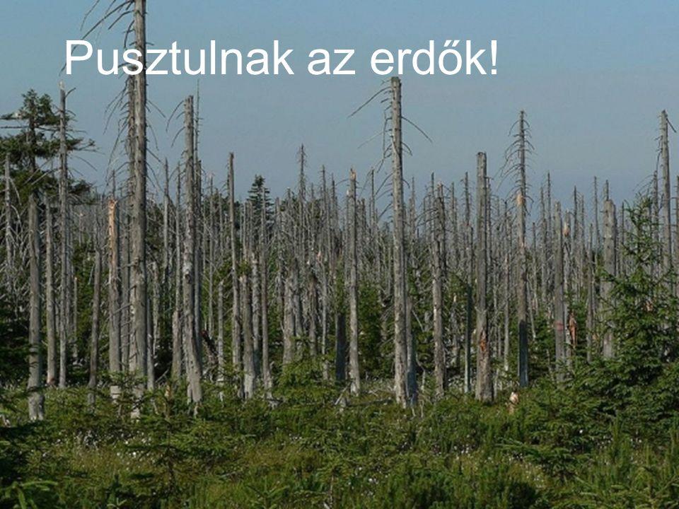 Pusztulnak az erdők!
