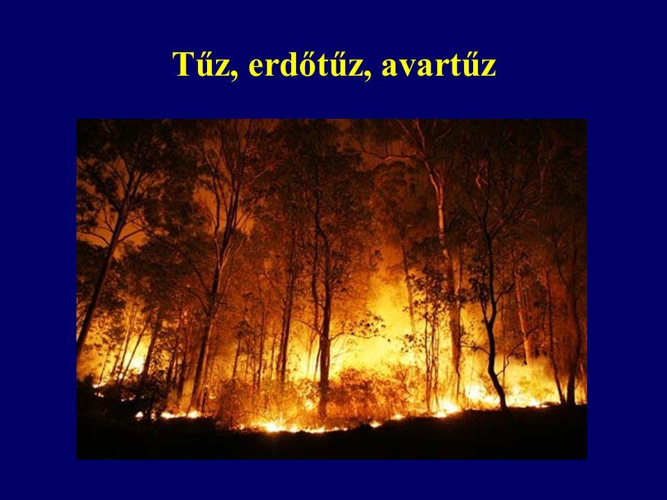 Tűz, erdőtűz, avartűz