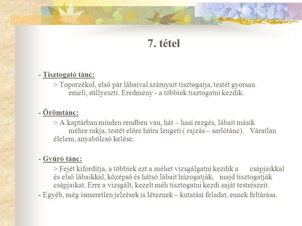 7. tétel - Tisztogató tánc:
