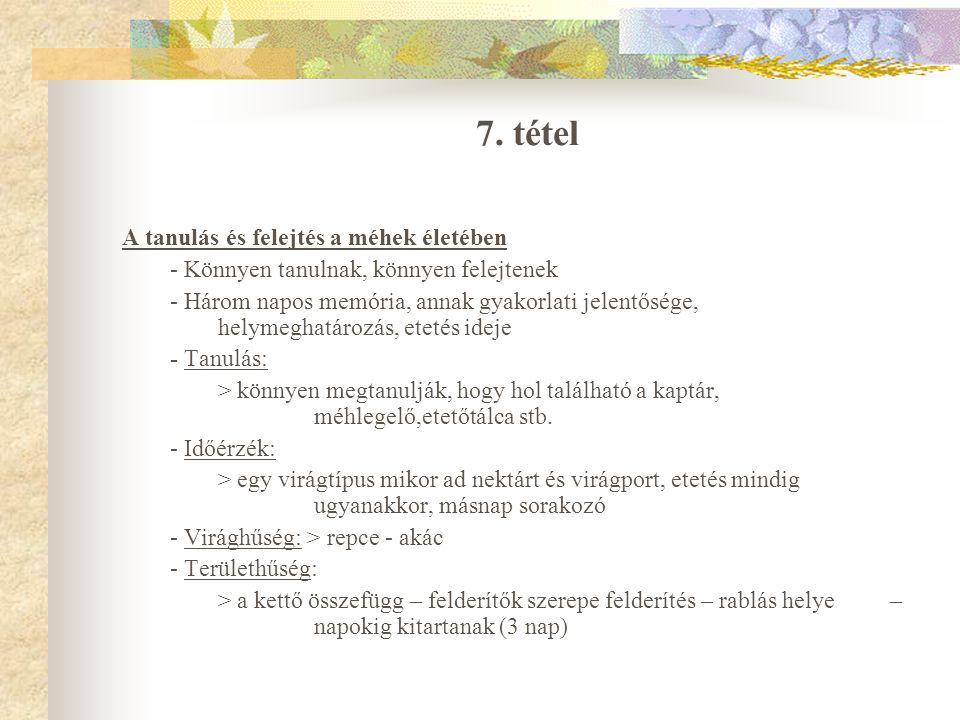 7. tétel A tanulás és felejtés a méhek életében