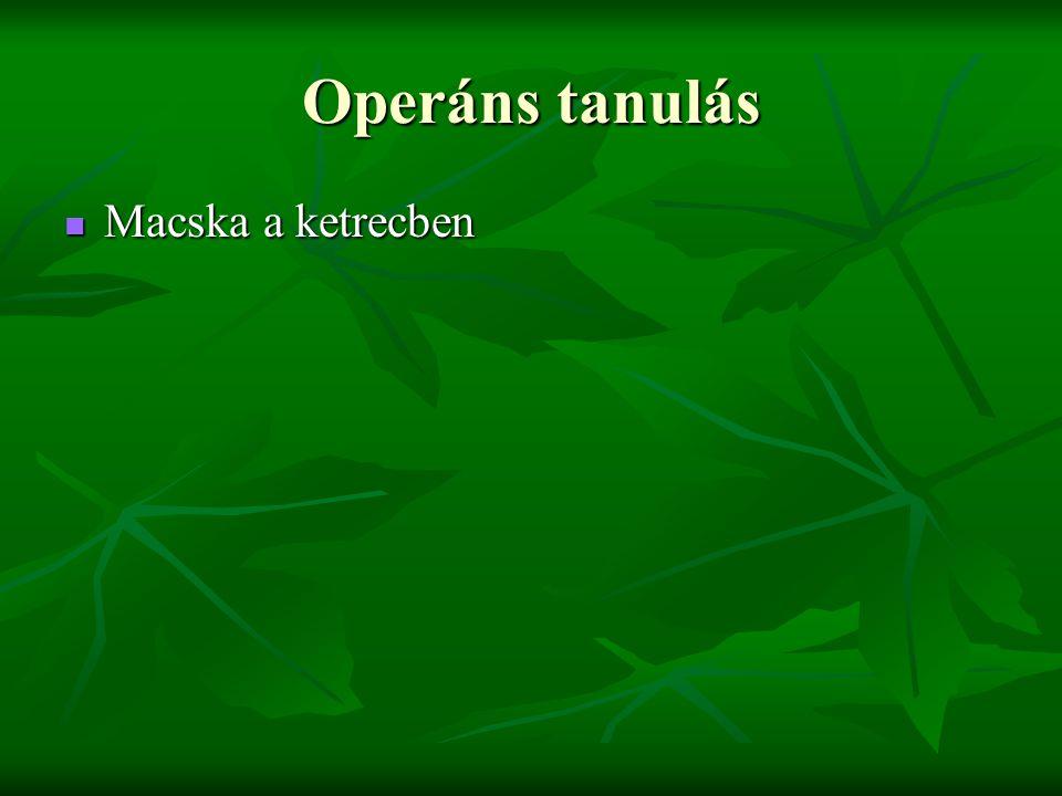 Operáns tanulás Macska a ketrecben
