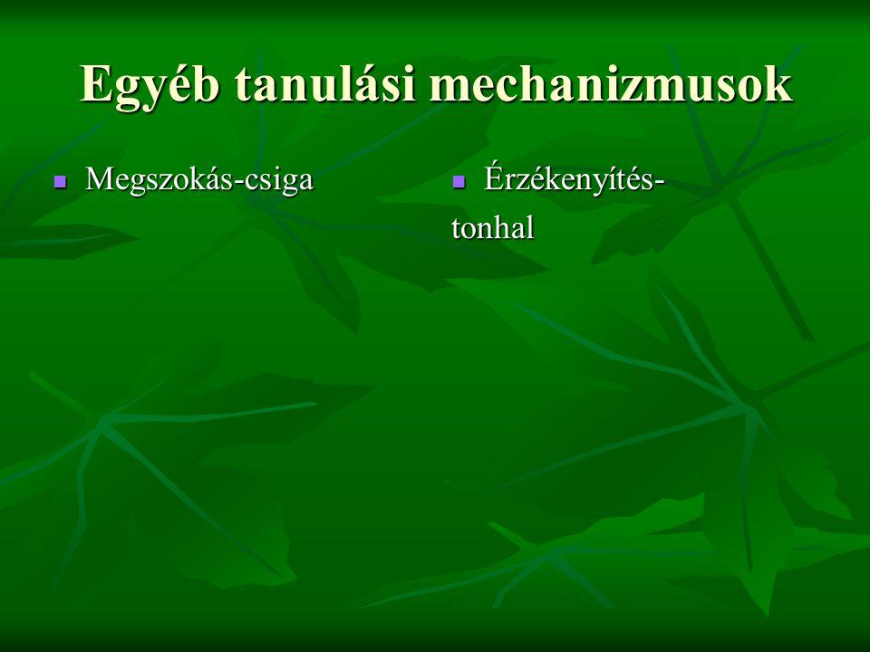 Egyéb tanulási mechanizmusok