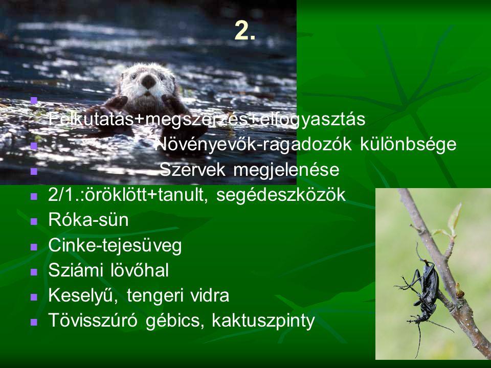 2. Felkutatás+megszerzés+elfogyasztás Növényevők-ragadozók különbsége