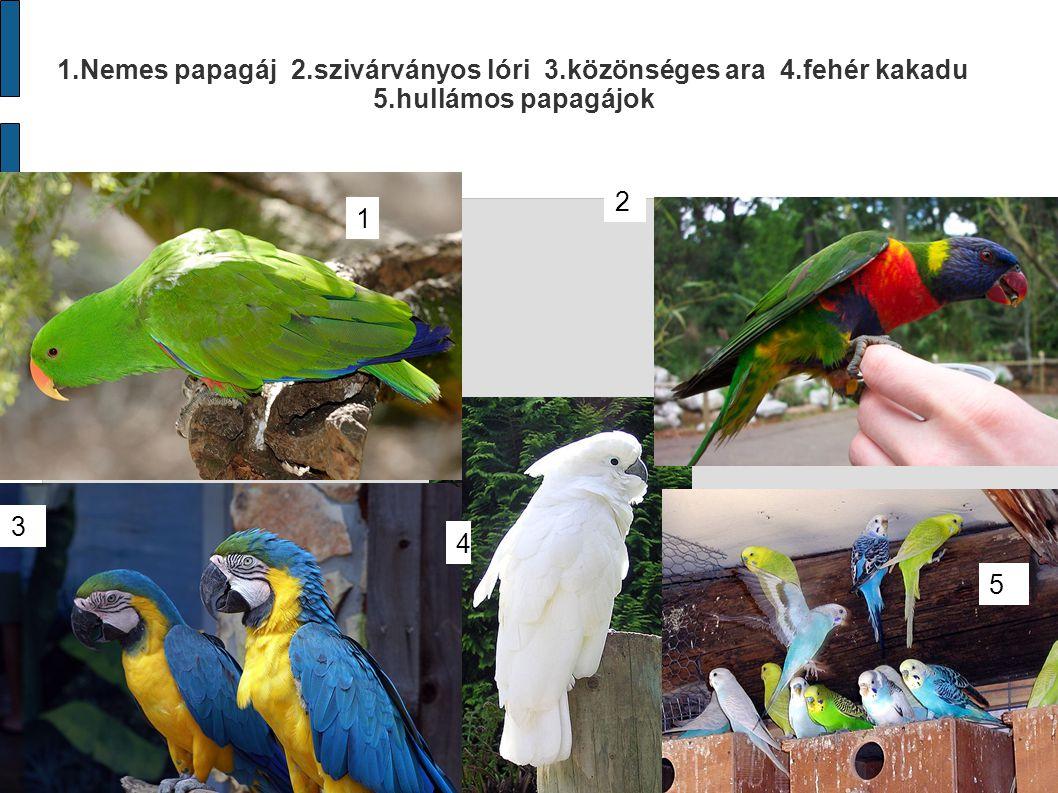 1. Nemes papagáj 2. szivárványos lóri 3. közönséges ara 4