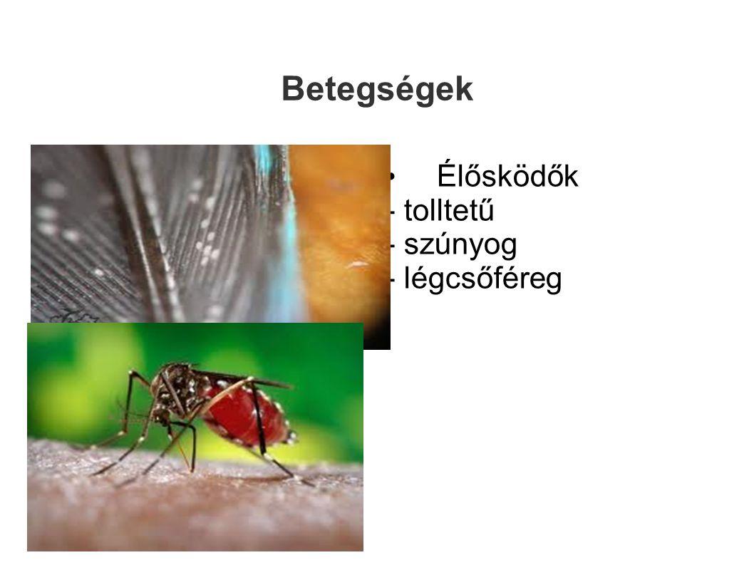 Betegségek Élősködők - tolltetű - szúnyog - légcsőféreg