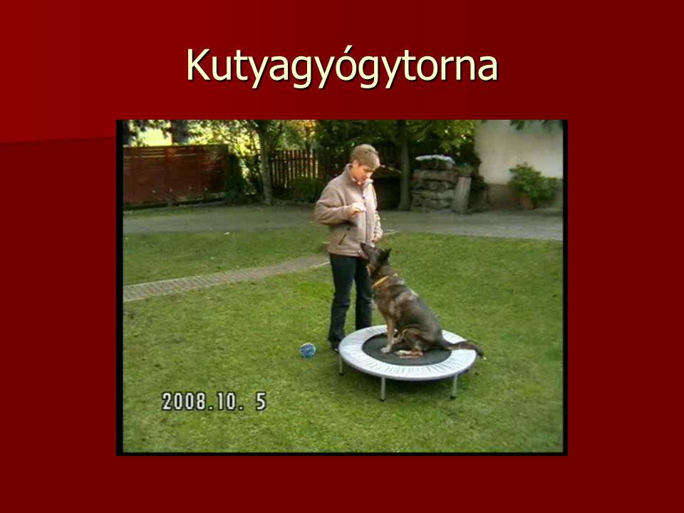 Kutyagyógytorna