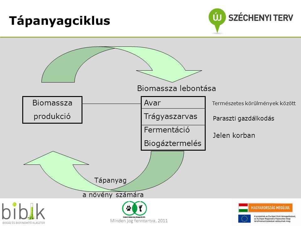 Tápanyagciklus Biomassza lebontása Biomassza produkció Avar