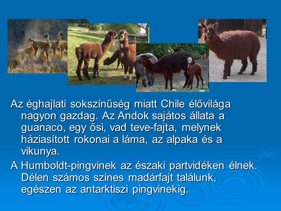 Az éghajlati sokszínűség miatt Chile élővilága nagyon gazdag