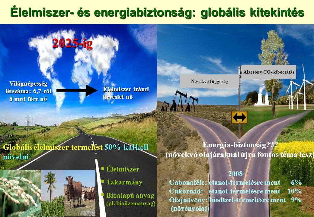 Élelmiszer- és energiabiztonság: globális kitekintés