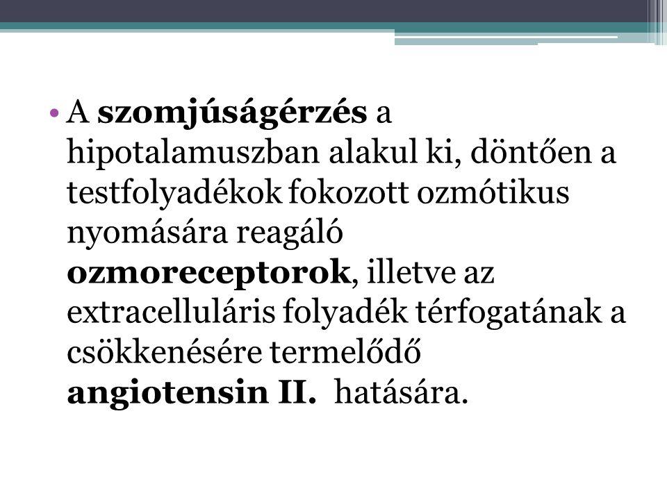 A szomjúságérzés a hipotalamuszban alakul ki, döntően a testfolyadékok fokozott ozmótikus nyomására reagáló ozmoreceptorok, illetve az extracelluláris folyadék térfogatának a csökkenésére termelődő angiotensin II.