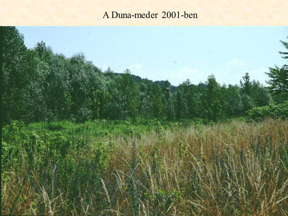 A Duna-meder 2001-ben