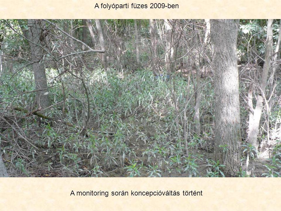 A folyóparti füzes 2009-ben