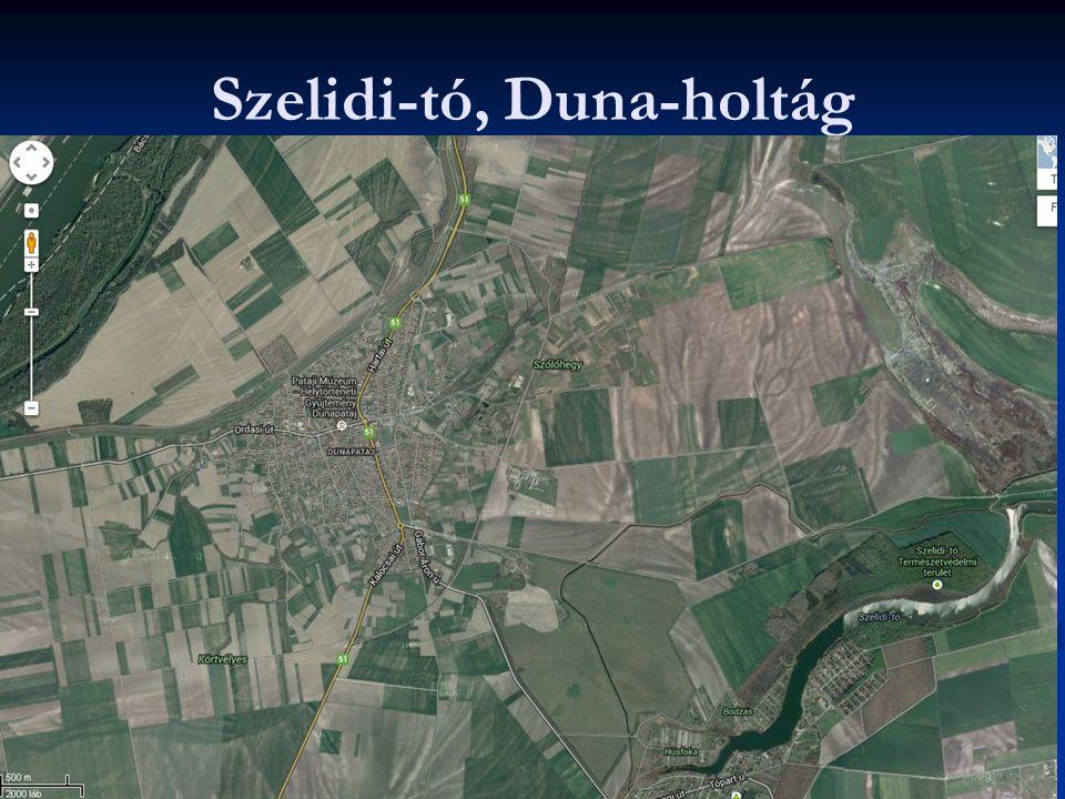 Szelidi-tó, Duna-holtág