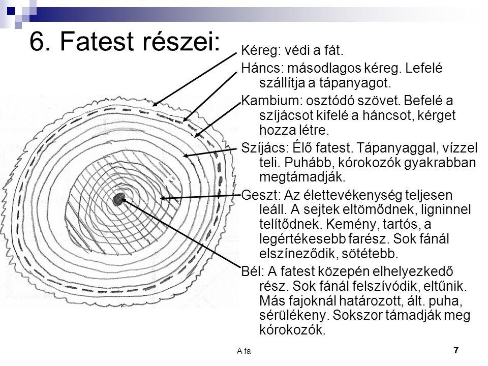 6. Fatest részei: Kéreg: védi a fát.