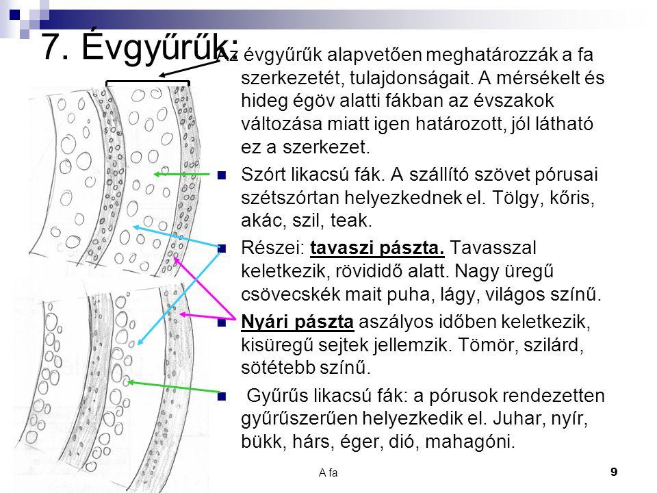7. Évgyűrűk: