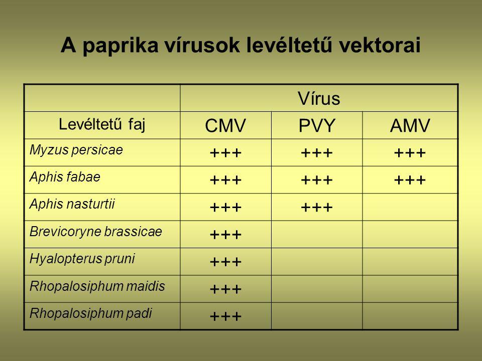 A paprika vírusok levéltetű vektorai
