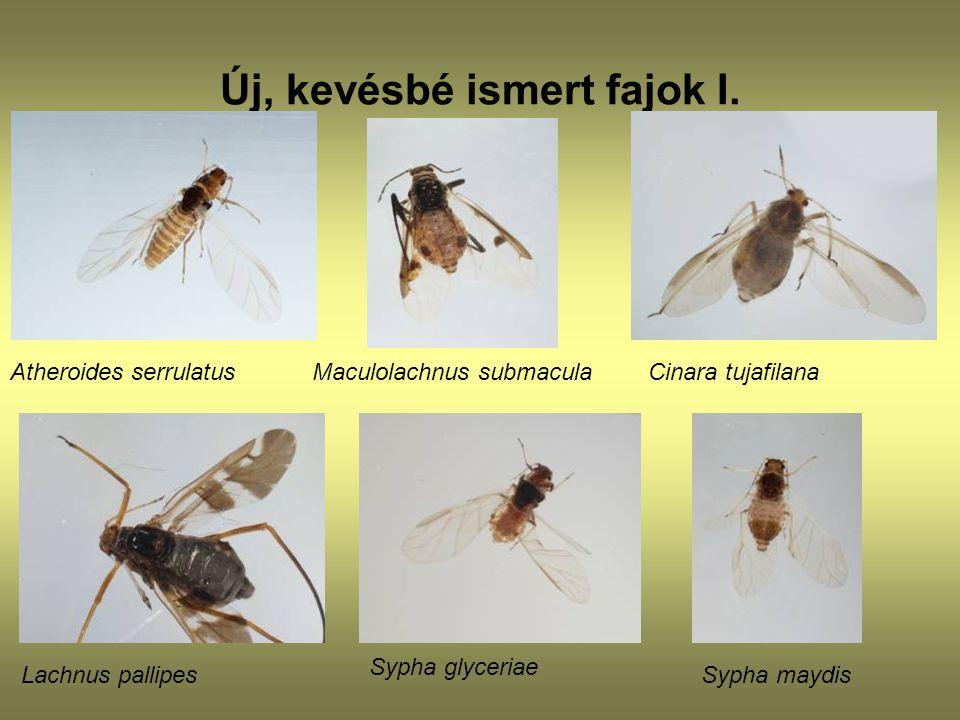 Új, kevésbé ismert fajok I.