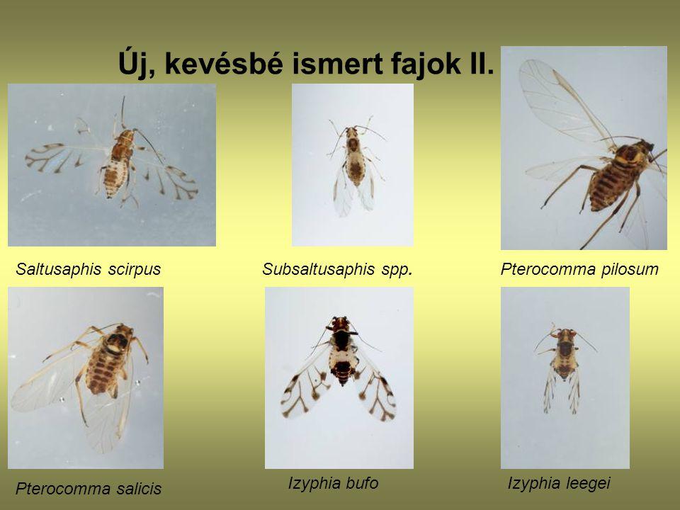 Új, kevésbé ismert fajok II.