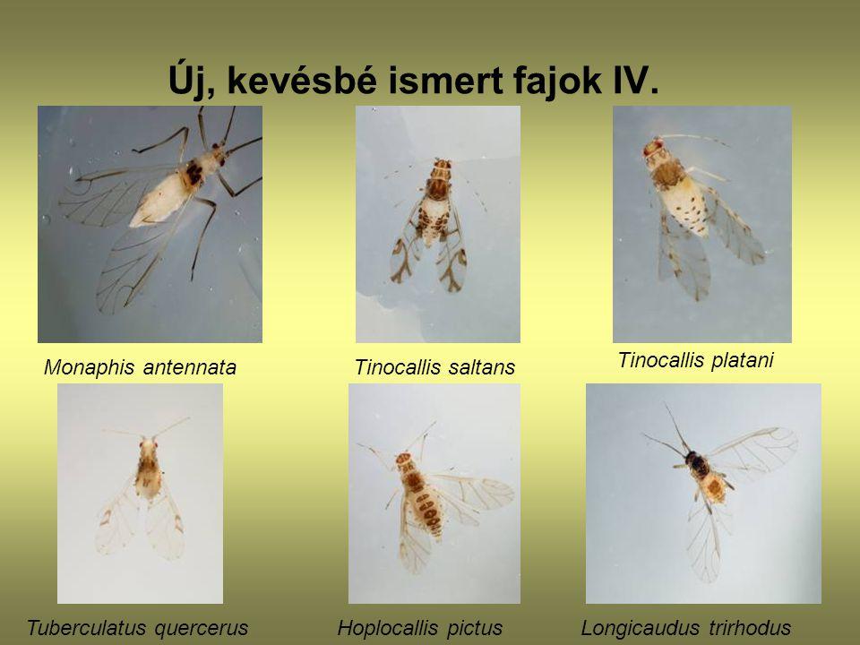 Új, kevésbé ismert fajok IV.