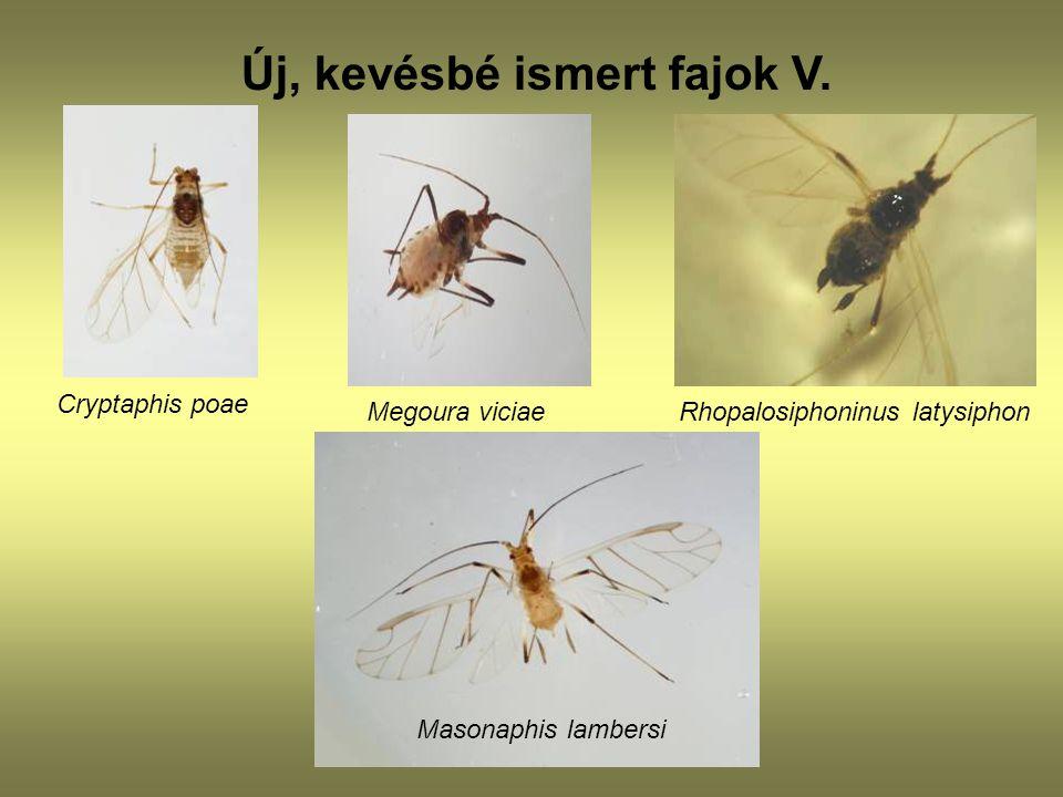 Új, kevésbé ismert fajok V.