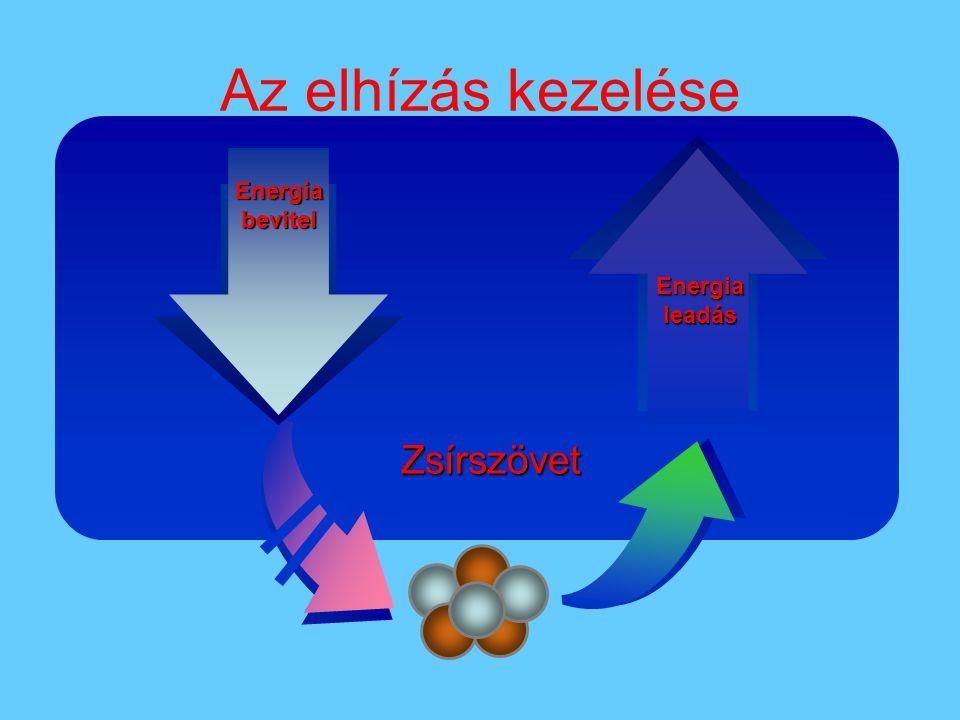Az elhízás kezelése Zsírszövet Energia bevitel Energia leadás