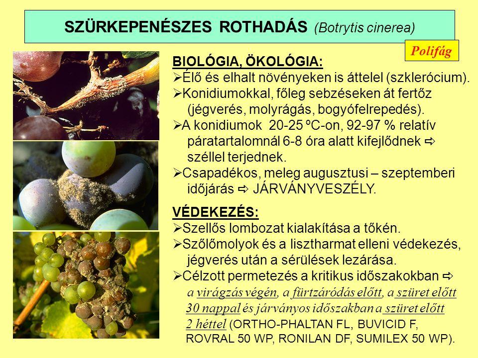 SZÜRKEPENÉSZES ROTHADÁS (Botrytis cinerea)