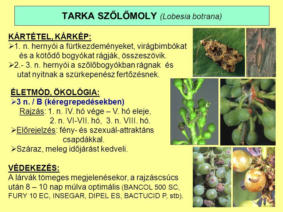 TARKA SZŐLŐMOLY (Lobesia botrana)