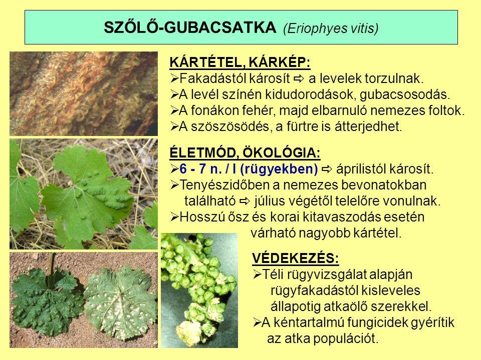 SZŐLŐ-GUBACSATKA (Eriophyes vitis)
