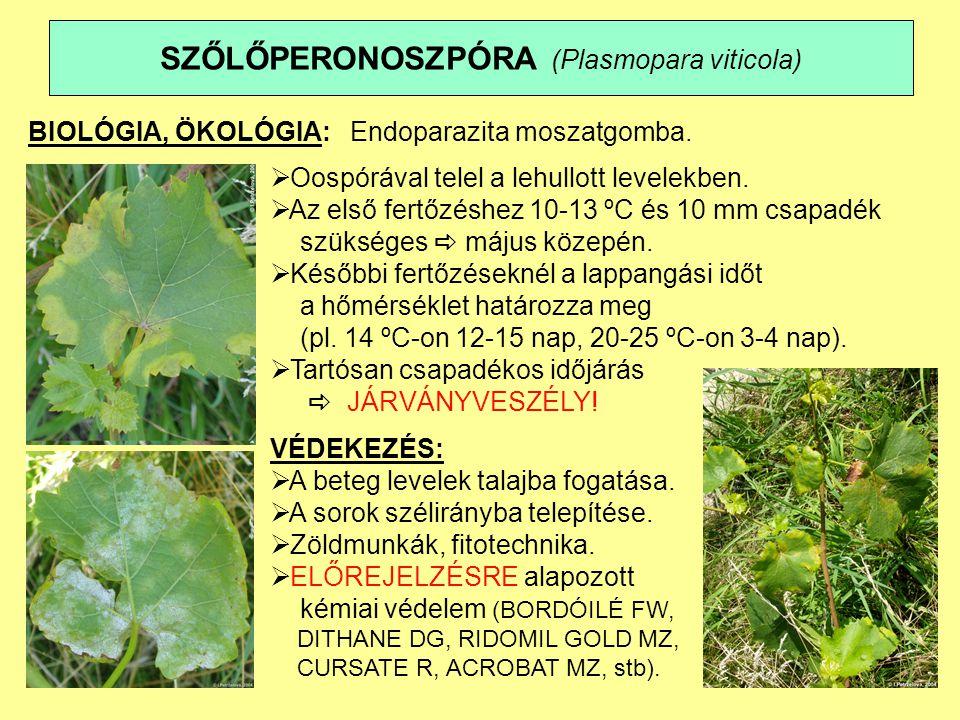 SZŐLŐPERONOSZPÓRA (Plasmopara viticola)