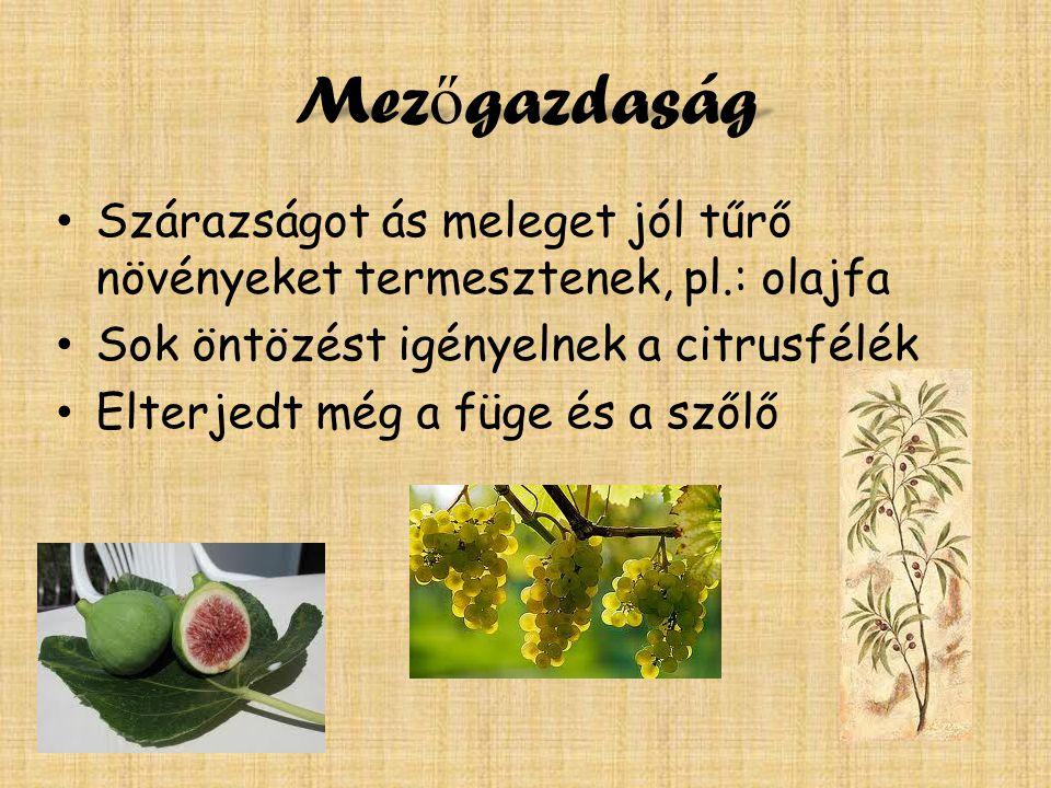 Mezőgazdaság Szárazságot ás meleget jól tűrő növényeket termesztenek, pl.: olajfa. Sok öntözést igényelnek a citrusfélék.