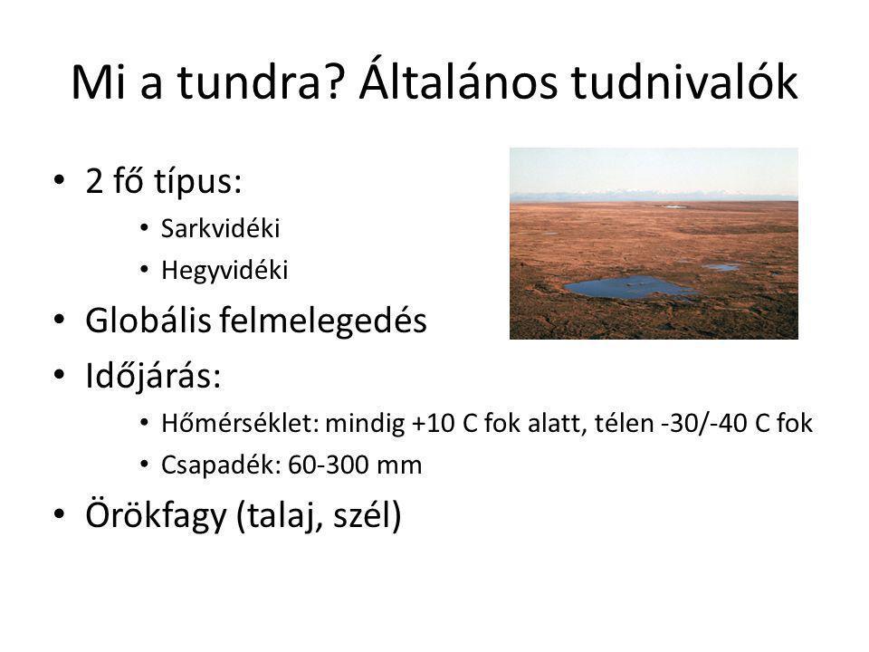 Mi a tundra Általános tudnivalók