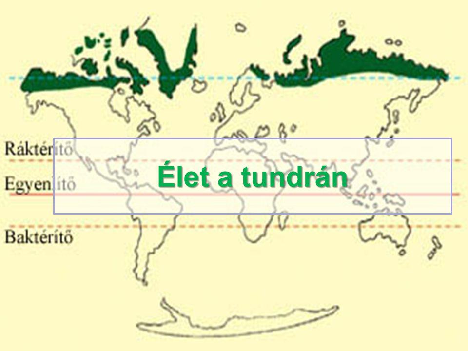 Élet a tundrán