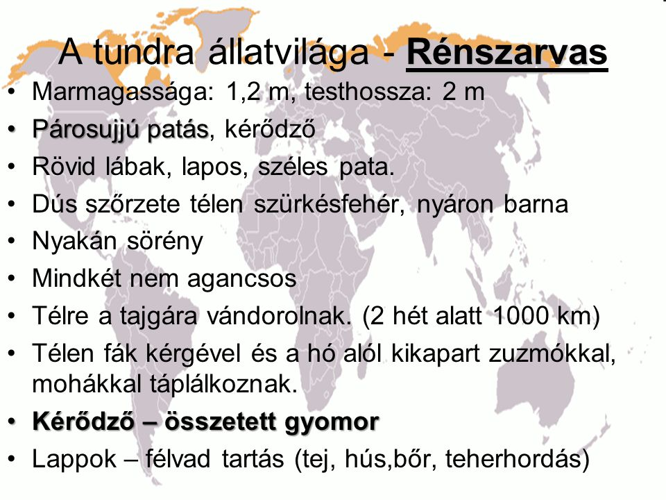 A tundra állatvilága - Rénszarvas