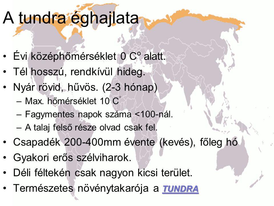A tundra éghajlata Évi középhőmérséklet 0 Co alatt.