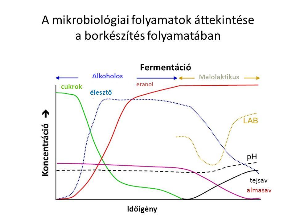 A mikrobiológiai folyamatok áttekintése a borkészítés folyamatában
