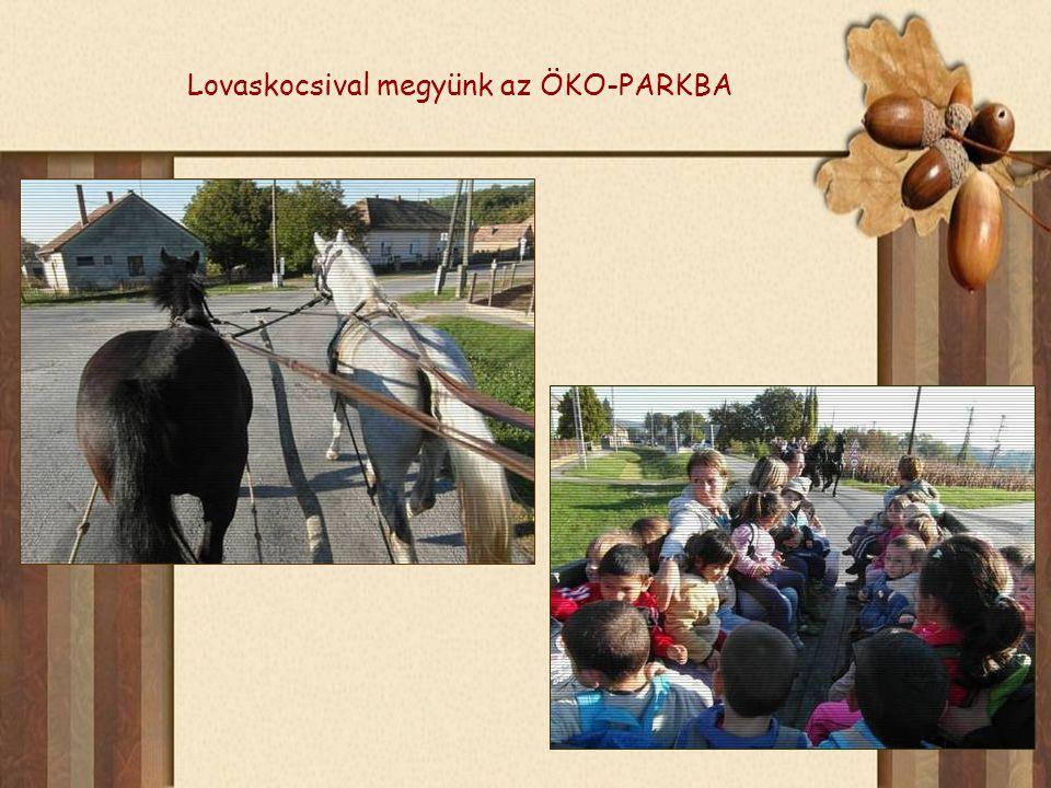 Lovaskocsival megyünk az ÖKO-PARKBA