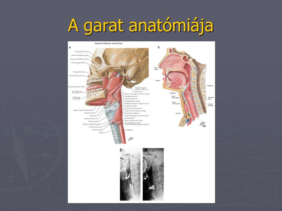 A garat anatómiája