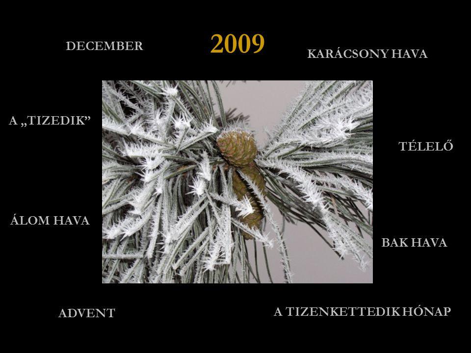 """2009 DECEMBER KARÁCSONY HAVA A """"TIZEDIK TÉLELŐ ÁLOM HAVA BAK HAVA"""