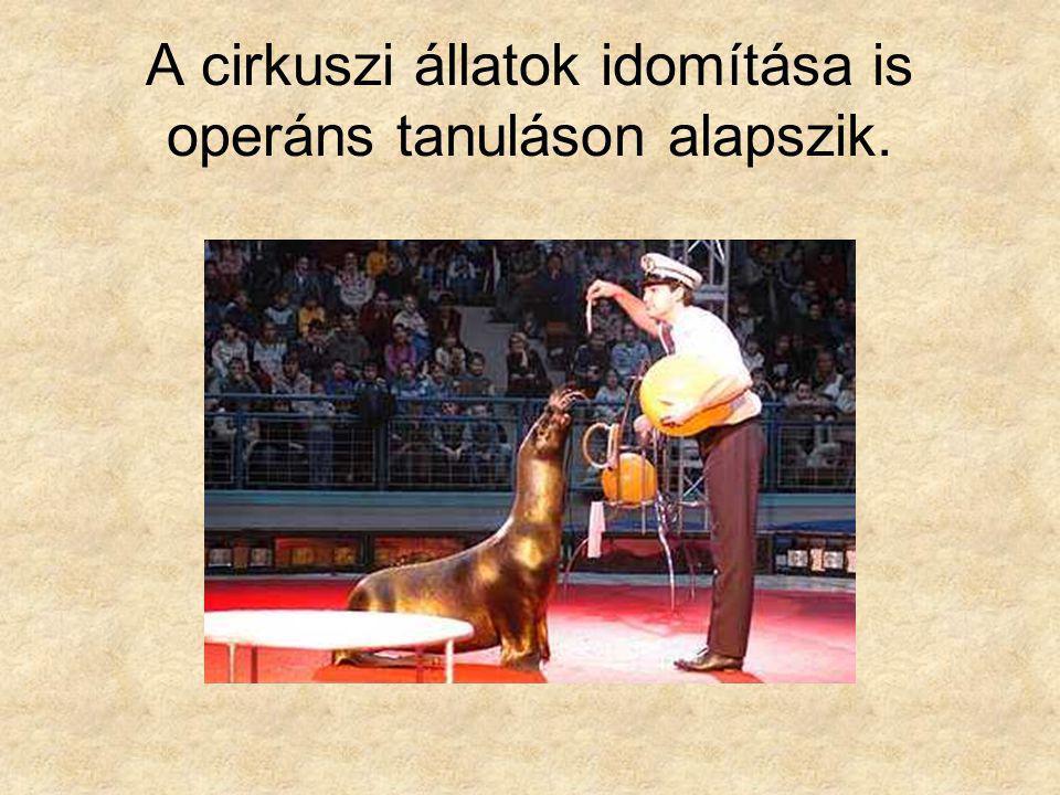 A cirkuszi állatok idomítása is operáns tanuláson alapszik.