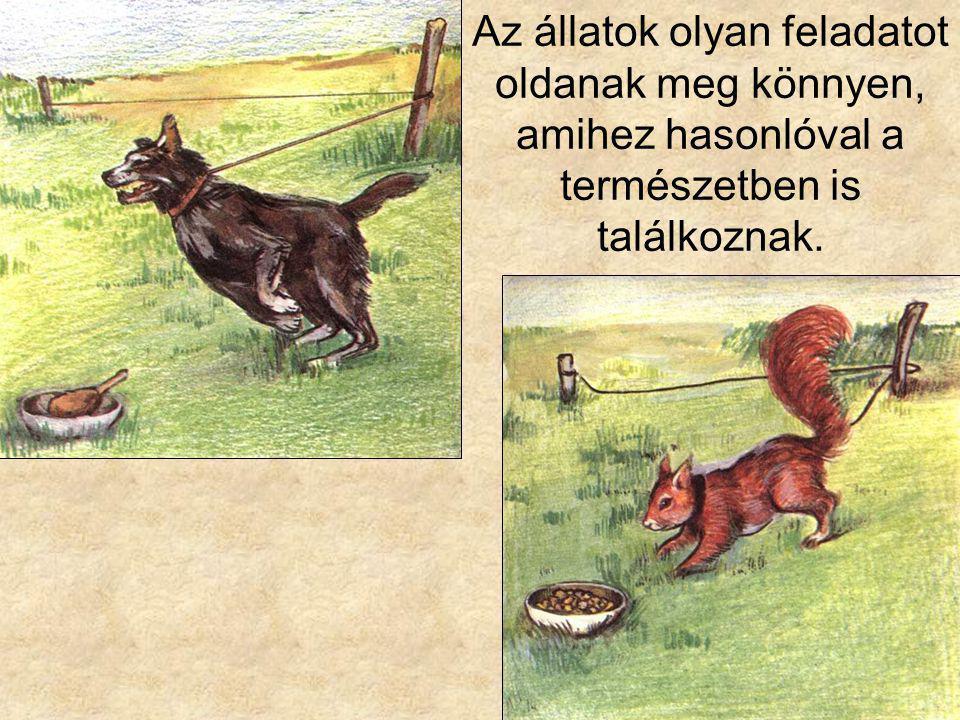 Az állatok olyan feladatot oldanak meg könnyen, amihez hasonlóval a természetben is találkoznak.