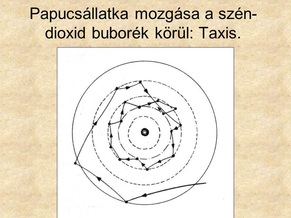 Papucsállatka mozgása a szén-dioxid buborék körül: Taxis.