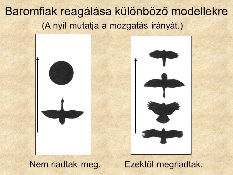 Baromfiak reagálása különböző modellekre